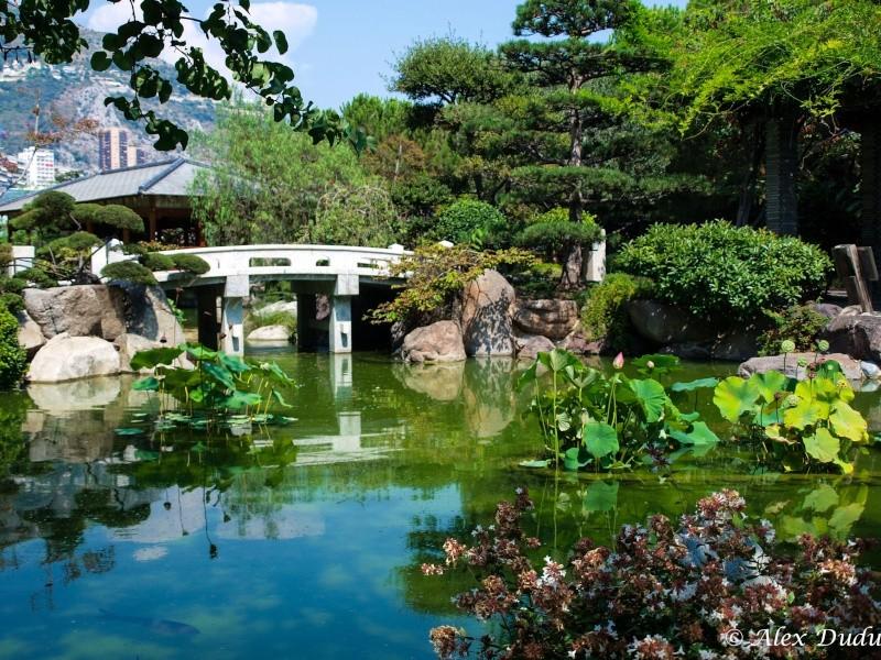 Le jardin japonais de Monaco!! P8202710
