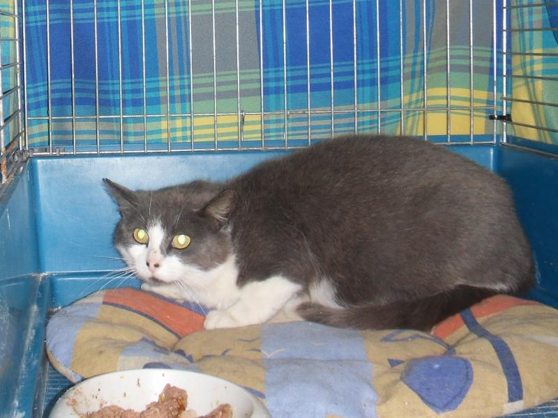 Stérilisation de chats errants Sdc11610