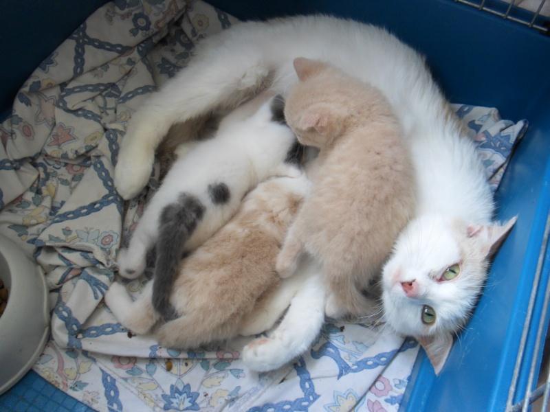 Stérilisation de chats errants Sdc11714