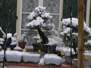 La neige P1012010