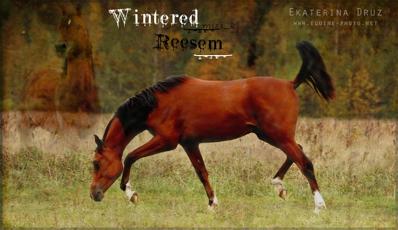 Commande pour Reese' =) Winter11