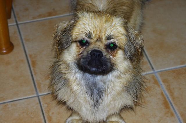 photos de vos chiens au naturel - Page 10 Imgp6310