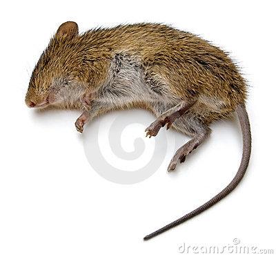 313 clous, donc 626 trous...! Rat-mo10