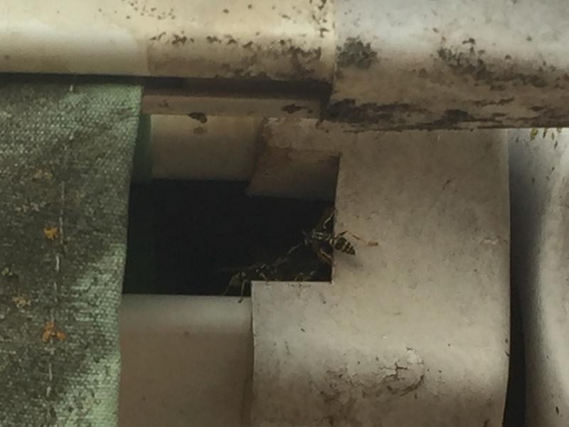 Guêpes sous rideau enroulant Image11