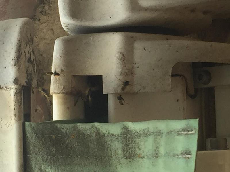 Guêpes sous rideau enroulant Image12