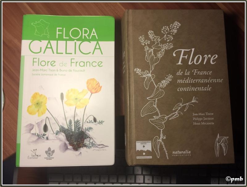 Bientôt une flore numerique Flores10