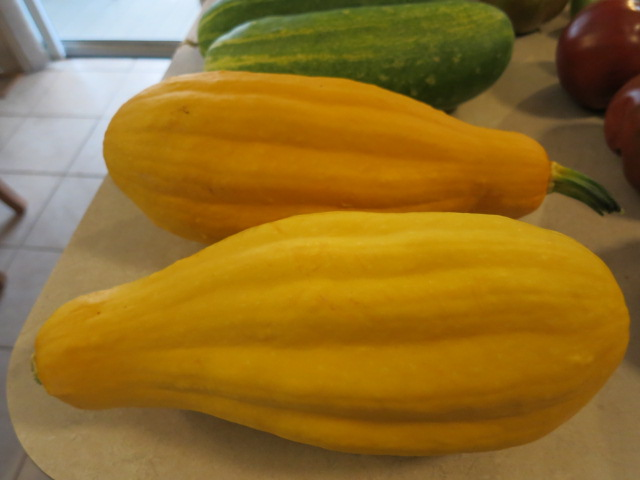 What do you get when you mix zucchini and pumpkin seeds? Crazy_10