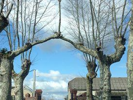 Deux arbres qui s'aiment :) 12821411