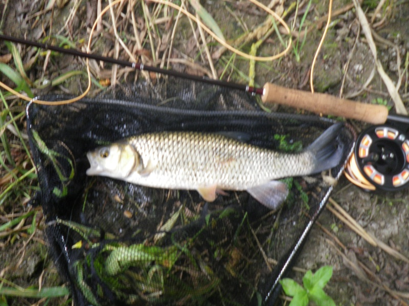 Sturminster Mill Chub_o10