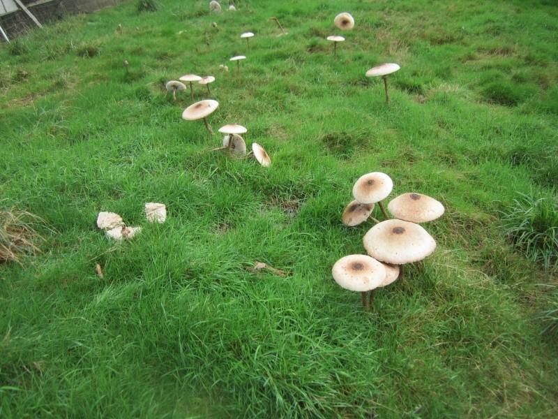 les champignons vont sortir Everes10