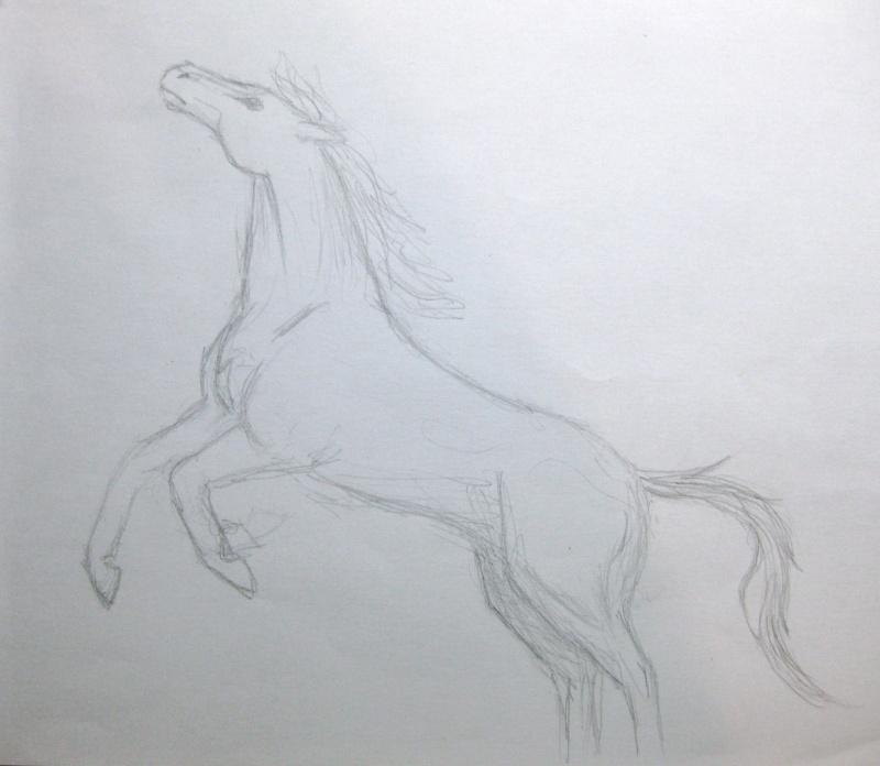 Horse 1 Img_4614