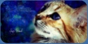 Imagin, le forum pour les super filles! - Portail I_logo10