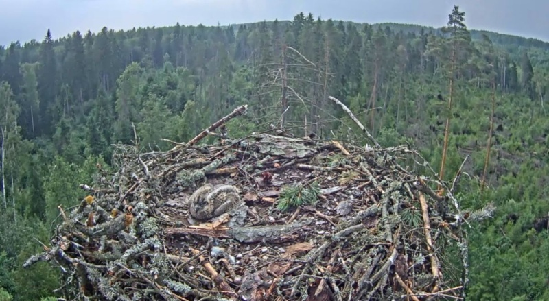 Wildtier-Livecams - Seite 28 Allein10