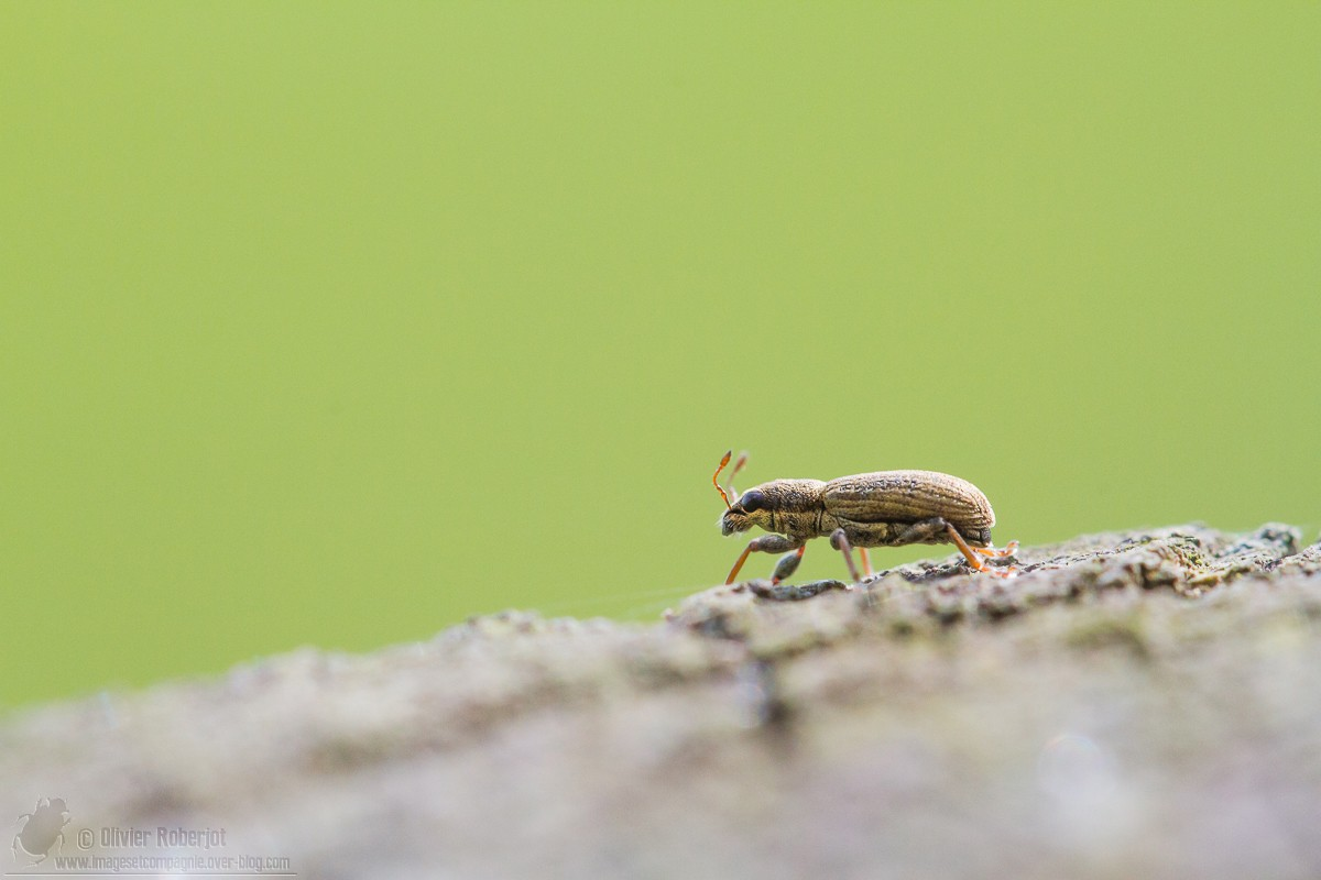 Mult'identification Insect22