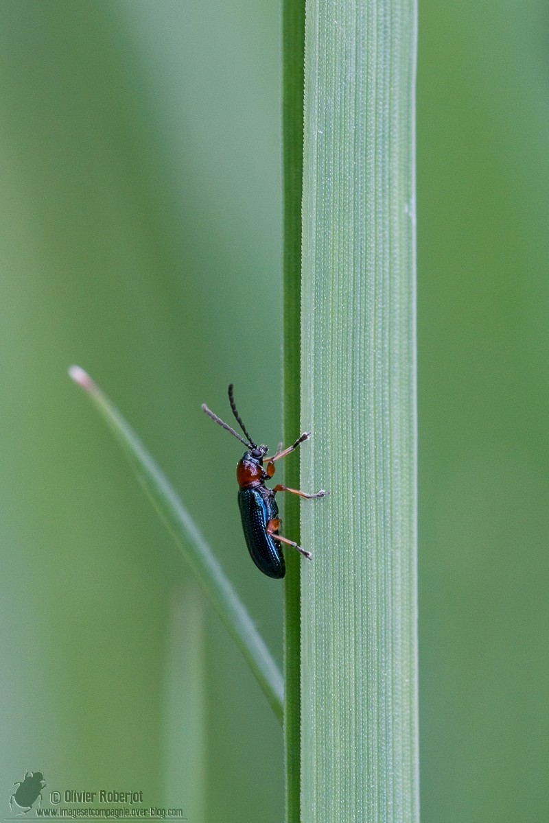 Mult'identification Insect24