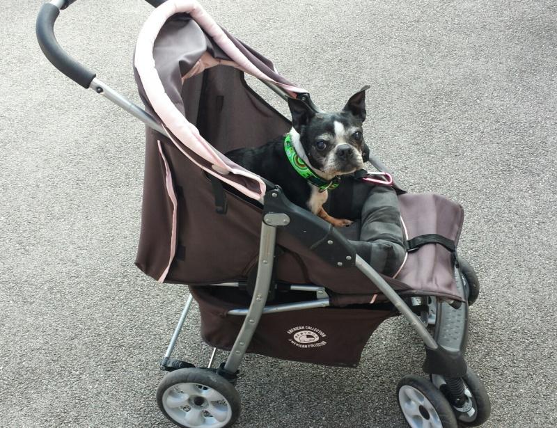 Modes de transport pour petits / vieux chiens qui fatiguent vite - Page 7 2016-013