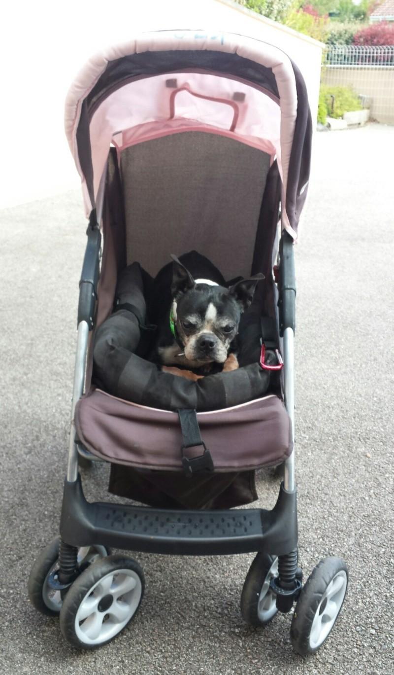 Modes de transport pour petits / vieux chiens qui fatiguent vite - Page 7 2016-014