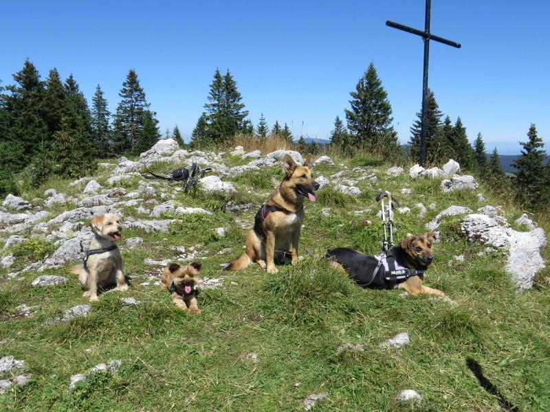 Balades canines: Pays de Gex/Jura/Genève ou Albertville (73) - Page 4 Img_2630