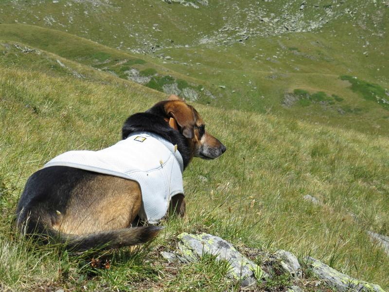 Balades canines: Pays de Gex/Jura/Genève ou Albertville (73) - Page 4 Img_2642