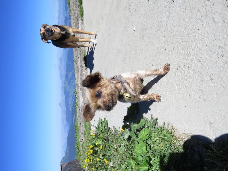 Balades canines: Pays de Gex/Jura/Genève ou Albertville (73) - Page 5 Img_2651