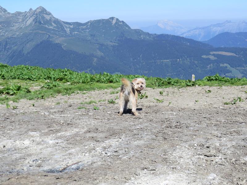 Balades canines: Pays de Gex/Jura/Genève ou Albertville (73) - Page 5 Img_2652
