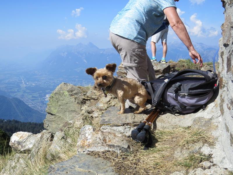 Balades canines: Pays de Gex/Jura/Genève ou Albertville (73) - Page 5 Img_2653