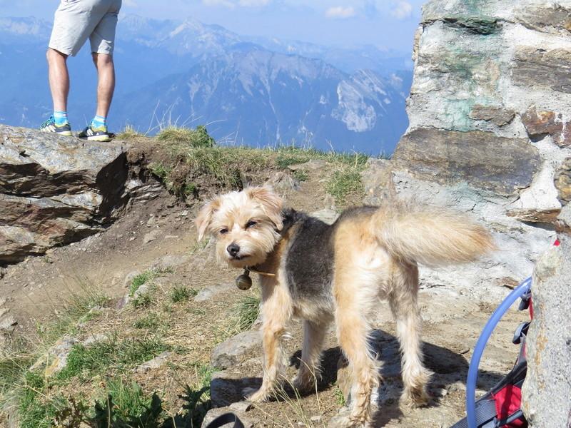 Balades canines: Pays de Gex/Jura/Genève ou Albertville (73) - Page 5 Img_2654