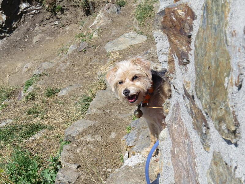Balades canines: Pays de Gex/Jura/Genève ou Albertville (73) - Page 5 Img_2655