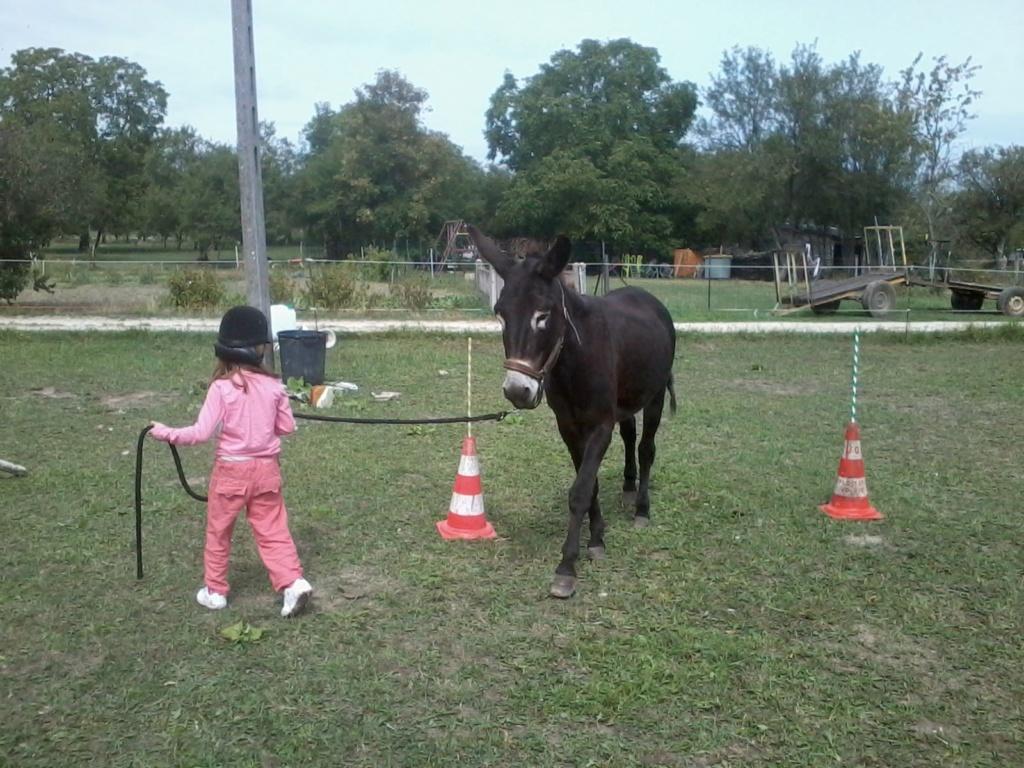 cheval - Eveil du cheval - Page 5 2018-035