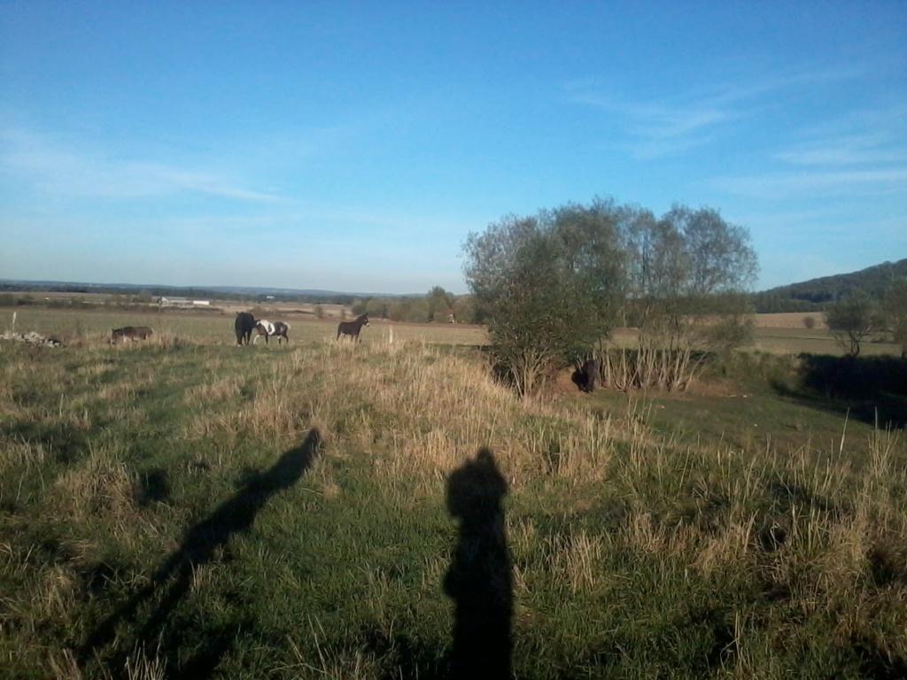 Iroquois, l'âne imprévu ^^ - Page 5 2018-066