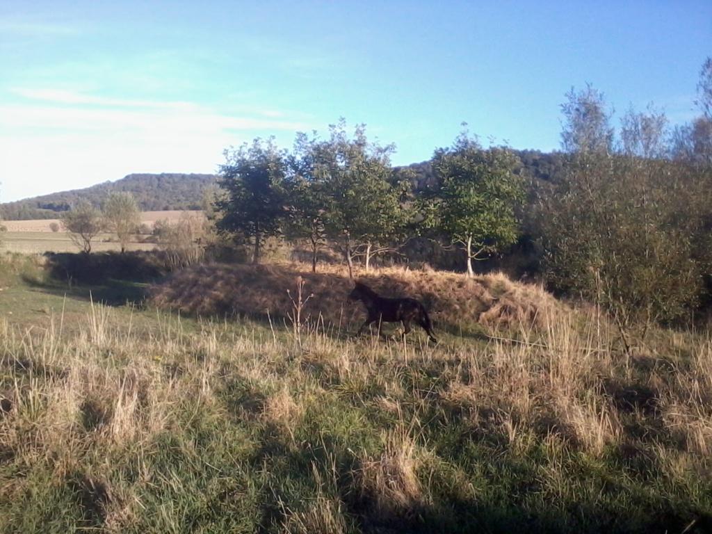 Iroquois, l'âne imprévu ^^ - Page 5 2018-068