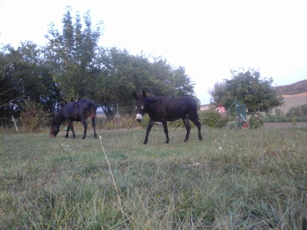 Iroquois, l'âne imprévu ^^ - Page 5 28aout15