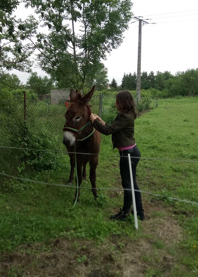 Iroquois, l'âne imprévu ^^ - Page 4 35236910