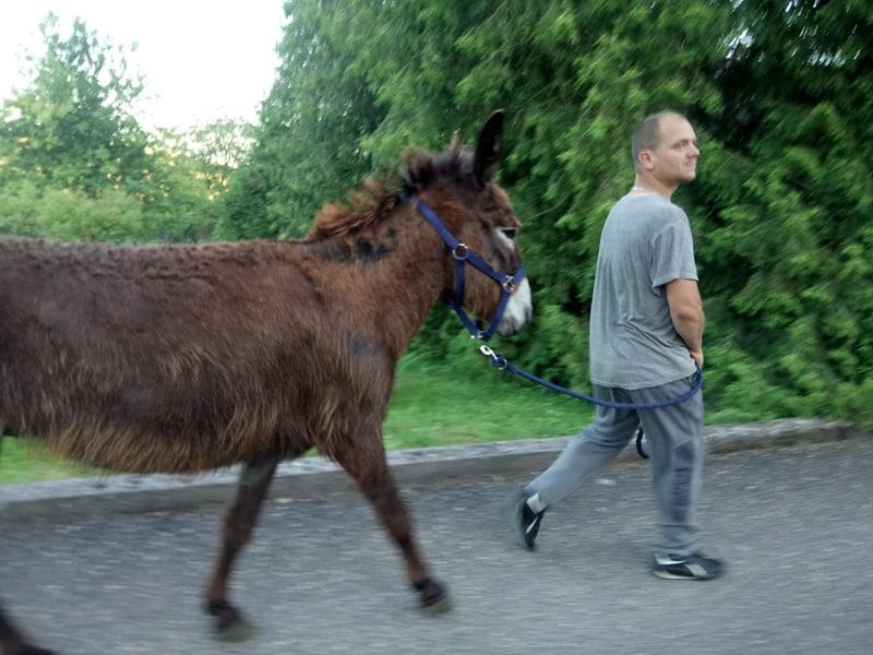 Iroquois, l'âne imprévu ^^ - Page 4 35749710