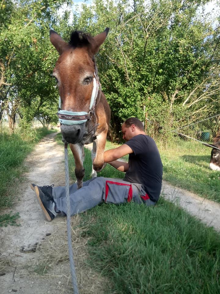 parage ane, mulet, bardot, chevaux - Page 5 37253611