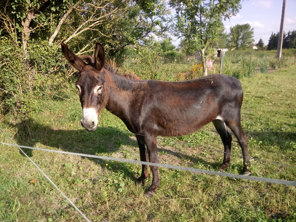 Iroquois, l'âne imprévu ^^ - Page 4 37344110