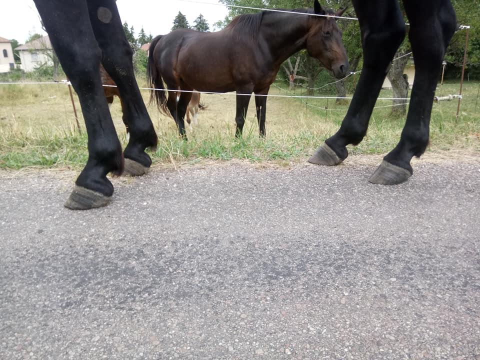 parage ane, mulet, bardot, chevaux - Page 6 38817910