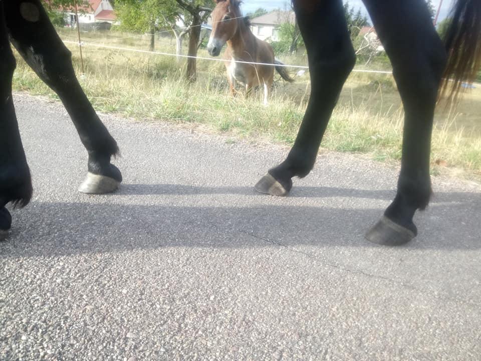 parage ane, mulet, bardot, chevaux - Page 6 38831410