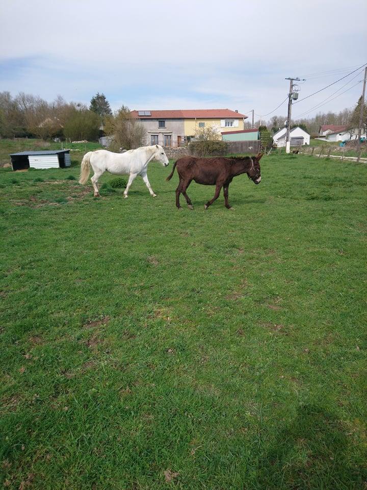 Iroquois, l'âne imprévu ^^ - Page 6 56835410