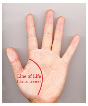 Can the length of the life line predict 'longevity'? Line-o10