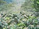 Honduras :) 100_1610