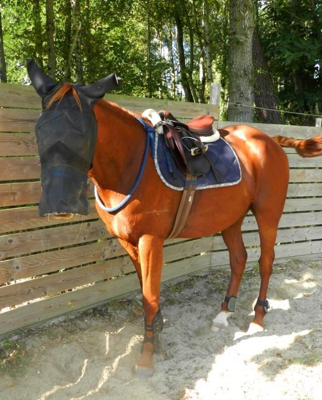 SISKO - TF né en 2007 - adopté en août 2011 par clagui - Page 4 Dscn4717