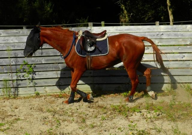 SISKO - TF né en 2007 - adopté en août 2011 par clagui - Page 4 Dscn4718