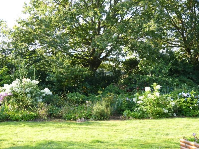 Hydrangea Paniculata Levana P1000510