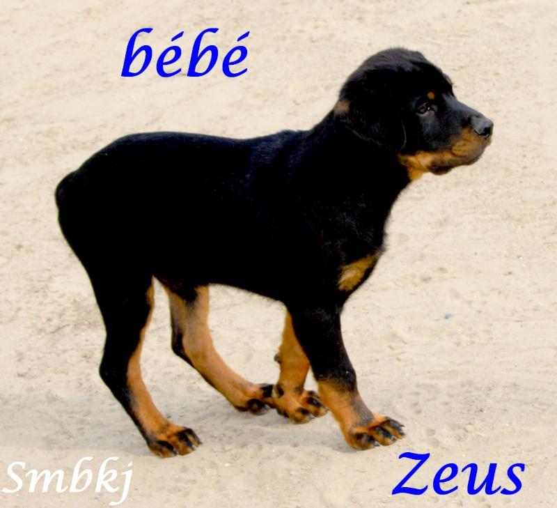 Zeus Img_2110