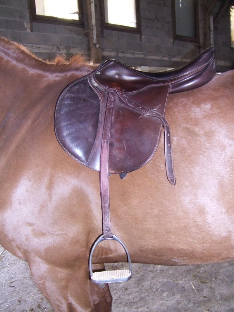 selle de cheval Dscf6414
