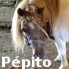 Zorte Berria: Nouvelle Chance Pepito10
