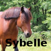 Zorte Berria: Nouvelle Chance Sybell10