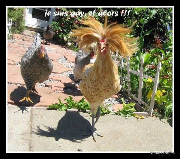 Bon Mercredi Humour10