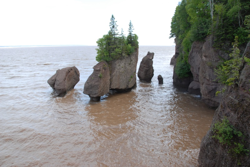 BAIE DE FUNDY. HOPEWELL ROCKS Dsc_5410